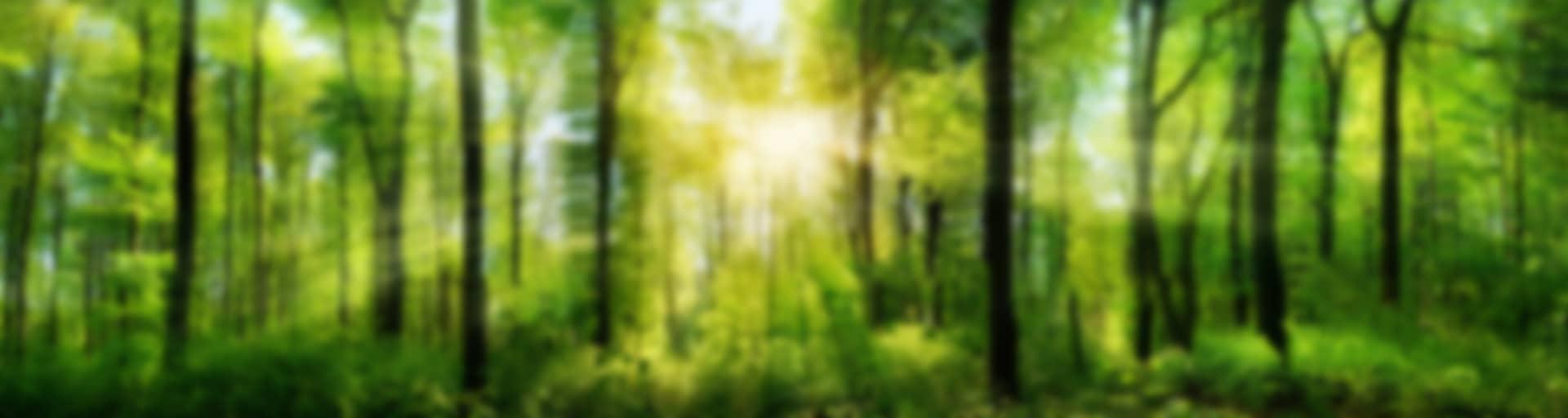 forest_bg